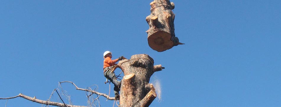 Tree Service Leads